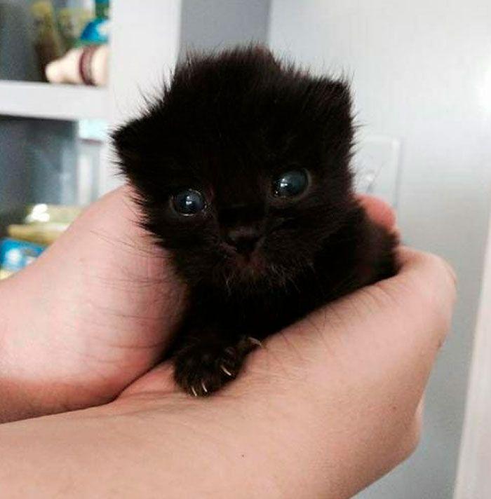35 adorável gato preto, fotos para mostrar que eles não são má sorte 31