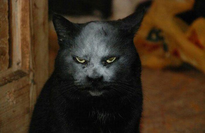 35 adorável gato preto, fotos para mostrar que eles não são má sorte 34