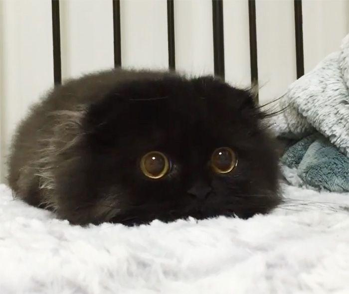 35 adorável gato preto, fotos para mostrar que eles não são má sorte 35