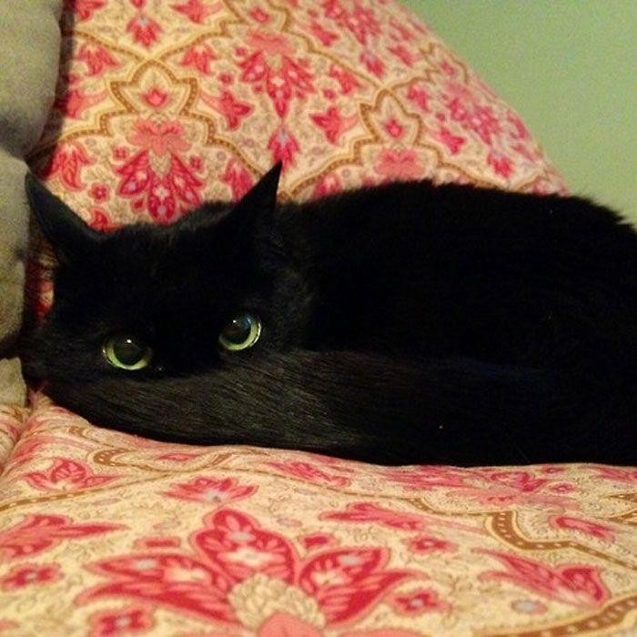 35 adorável gato preto, fotos para mostrar que eles não são má sorte 36