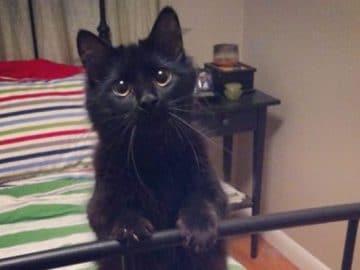 35 adorável gato preto, fotos para mostrar que eles não são má sorte 47