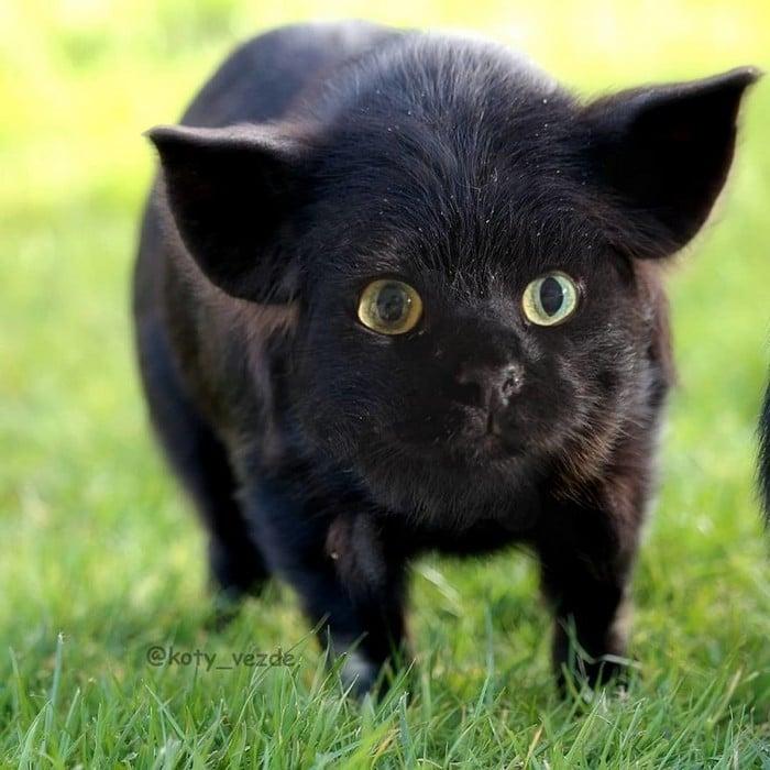 Alguém está imaginado como tudo seria se tivesse a cara de um gato e o resultado é perturbador (40 fotos) 8