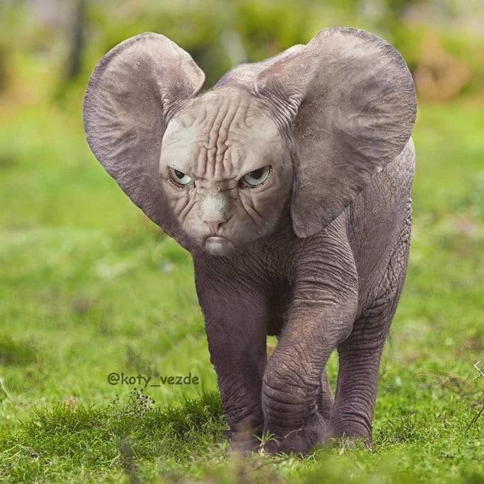 Alguém está imaginado como tudo seria se tivesse a cara de um gato e o resultado é perturbador (40 fotos) 20