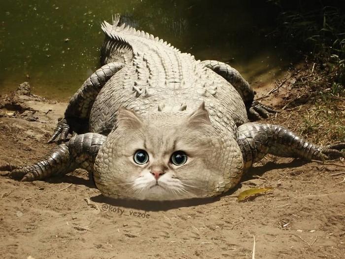 Alguém está imaginado como tudo seria se tivesse a cara de um gato e o resultado é perturbador (40 fotos) 21