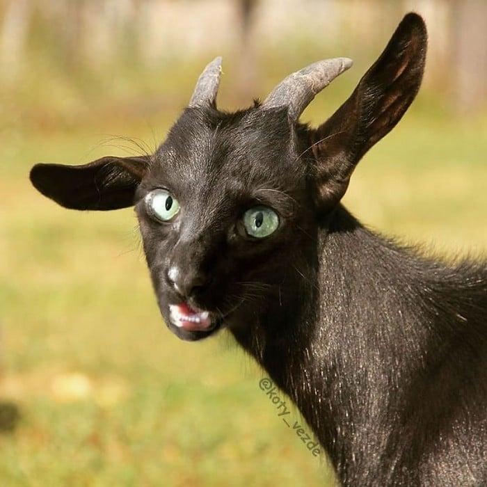 Alguém está imaginado como tudo seria se tivesse a cara de um gato e o resultado é perturbador (40 fotos) 31