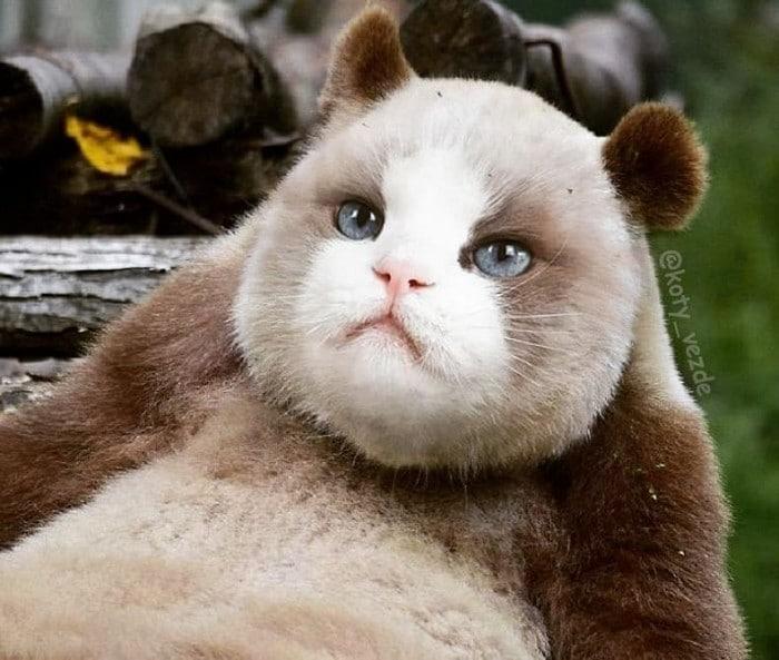 Alguém está imaginado como tudo seria se tivesse a cara de um gato e o resultado é perturbador (40 fotos) 32
