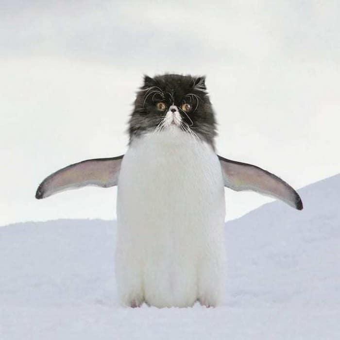 Alguém está imaginado como tudo seria se tivesse a cara de um gato e o resultado é perturbador (40 fotos) 34