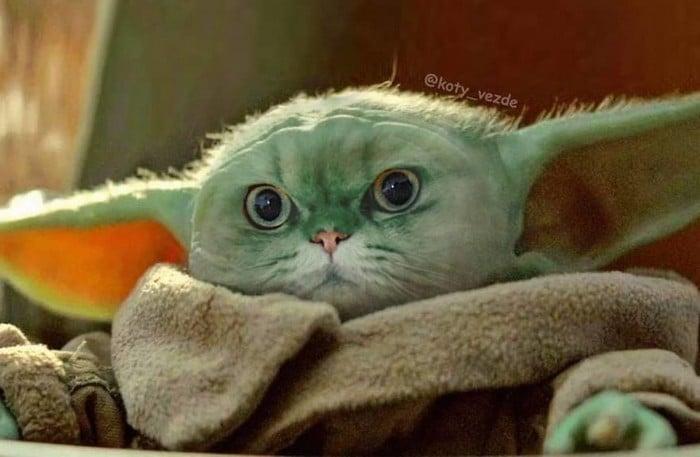 Alguém está imaginado como tudo seria se tivesse a cara de um gato e o resultado é perturbador (40 fotos) 36