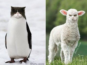 Alguém está imaginado como tudo seria se tivesse a cara de um gato e o resultado é perturbador (40 fotos) 4