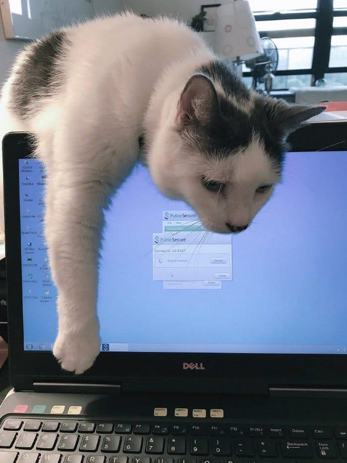 As pessoas estão compartilhando como seus animais de estimação lidam com eles trabalhando em casa 6