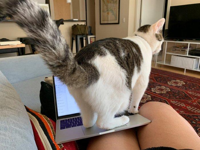 As pessoas estão compartilhando como seus animais de estimação lidam com eles trabalhando em casa 9