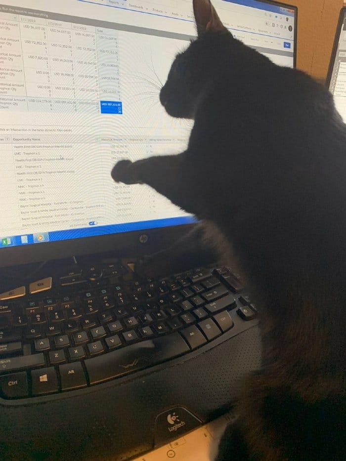 As pessoas estão compartilhando como seus animais de estimação lidam com eles trabalhando em casa 17