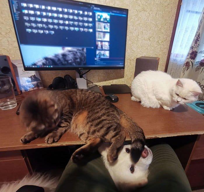 As pessoas estão compartilhando como seus animais de estimação lidam com eles trabalhando em casa 20