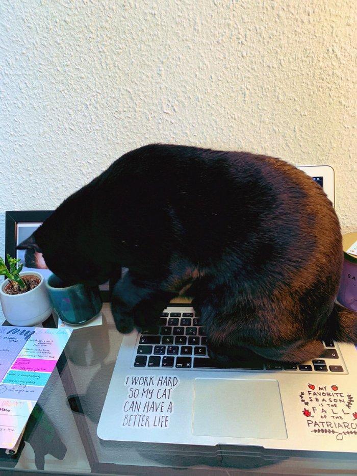 As pessoas estão compartilhando como seus animais de estimação lidam com eles trabalhando em casa 23