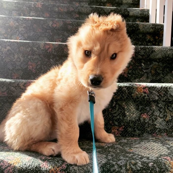 """Conheça Rae, o """"cão unicórnio"""" com uma orelha no meio da cabeça (17 fotos) 3"""