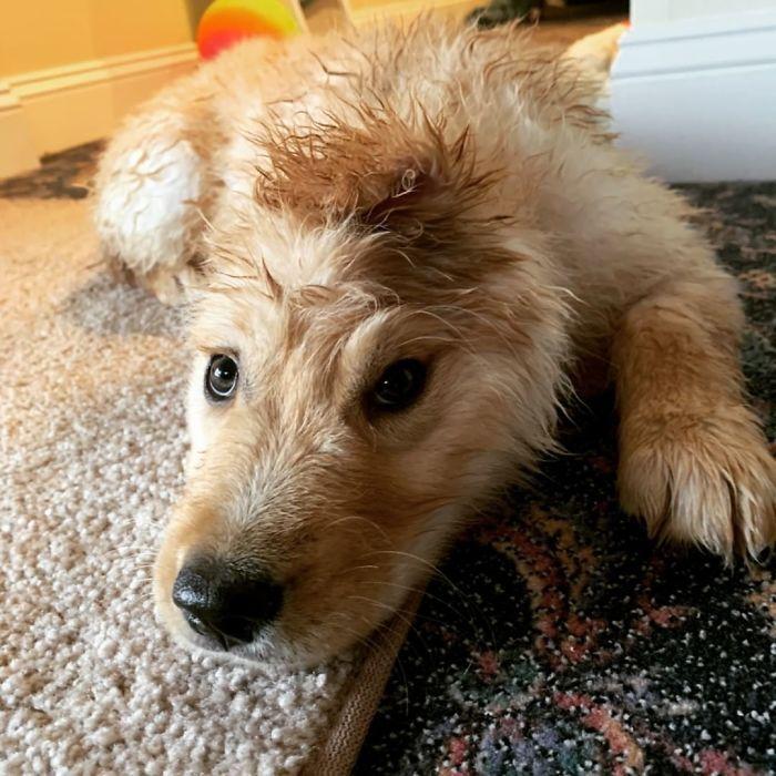"""Conheça Rae, o """"cão unicórnio"""" com uma orelha no meio da cabeça (17 fotos) 5"""