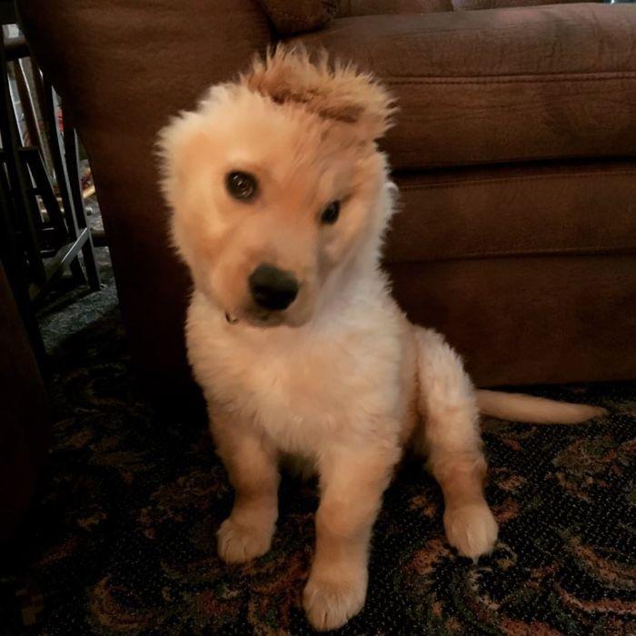 """Conheça Rae, o """"cão unicórnio"""" com uma orelha no meio da cabeça (17 fotos) 6"""