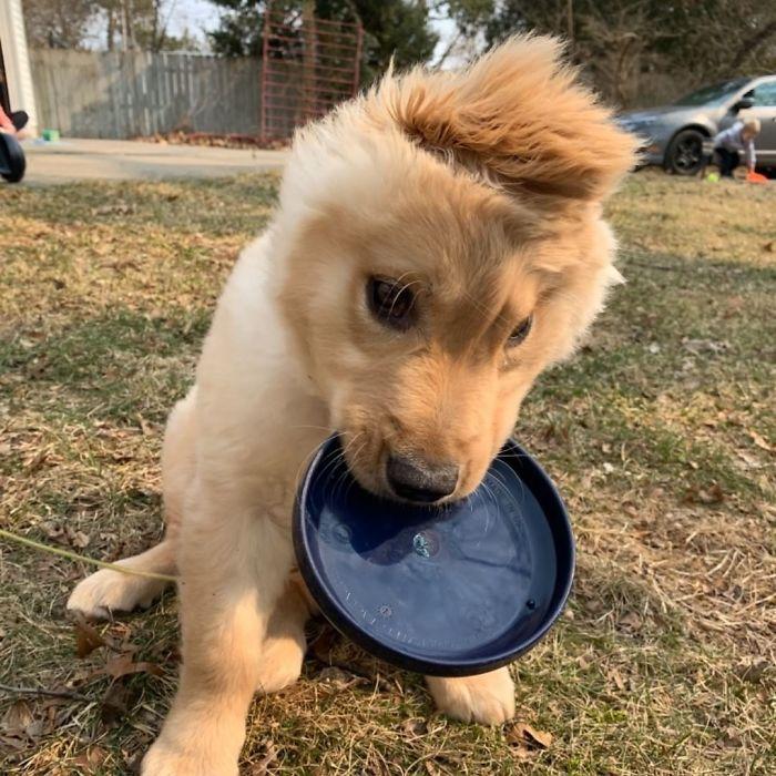 """Conheça Rae, o """"cão unicórnio"""" com uma orelha no meio da cabeça (17 fotos) 7"""