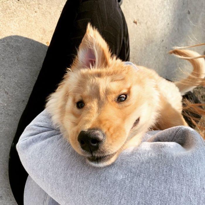 """Conheça Rae, o """"cão unicórnio"""" com uma orelha no meio da cabeça (17 fotos) 9"""