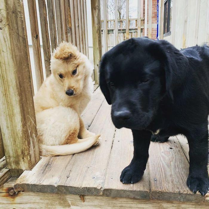 """Conheça Rae, o """"cão unicórnio"""" com uma orelha no meio da cabeça (17 fotos) 11"""