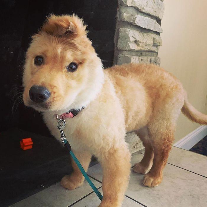"""Conheça Rae, o """"cão unicórnio"""" com uma orelha no meio da cabeça (17 fotos) 13"""