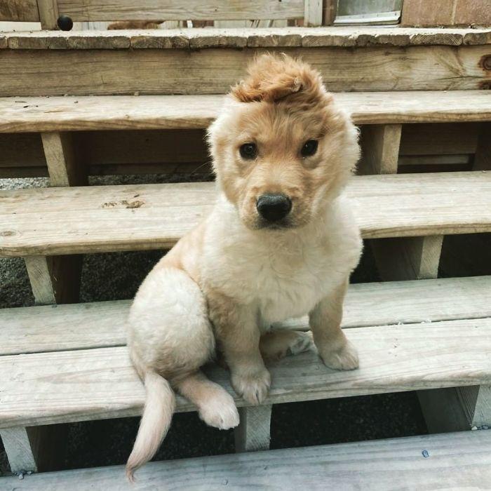 """Conheça Rae, o """"cão unicórnio"""" com uma orelha no meio da cabeça (17 fotos) 16"""