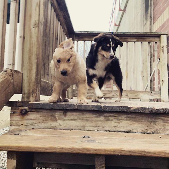 """Conheça Rae, o """"cão unicórnio"""" com uma orelha no meio da cabeça (17 fotos) 17"""