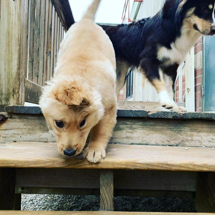 """Conheça Rae, o """"cão unicórnio"""" com uma orelha no meio da cabeça (17 fotos) 18"""
