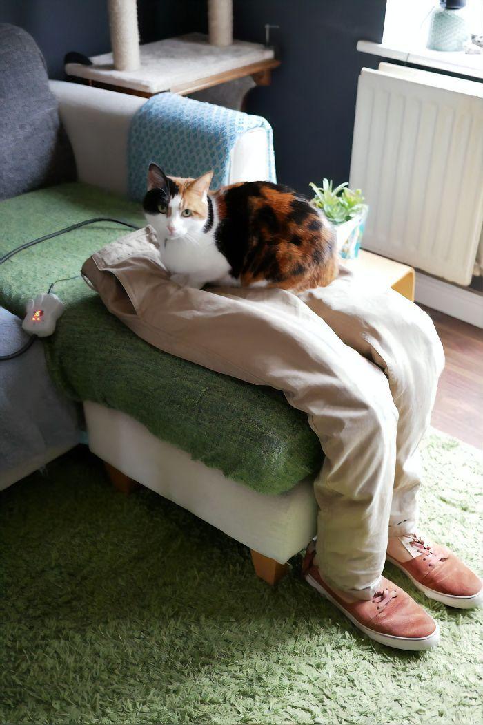 Este gato era super pegajoso, então seus donos a enganaram com um colo falso 9