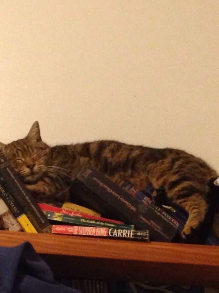 40 gatos que dormiram nos lugares mais estranhos 4