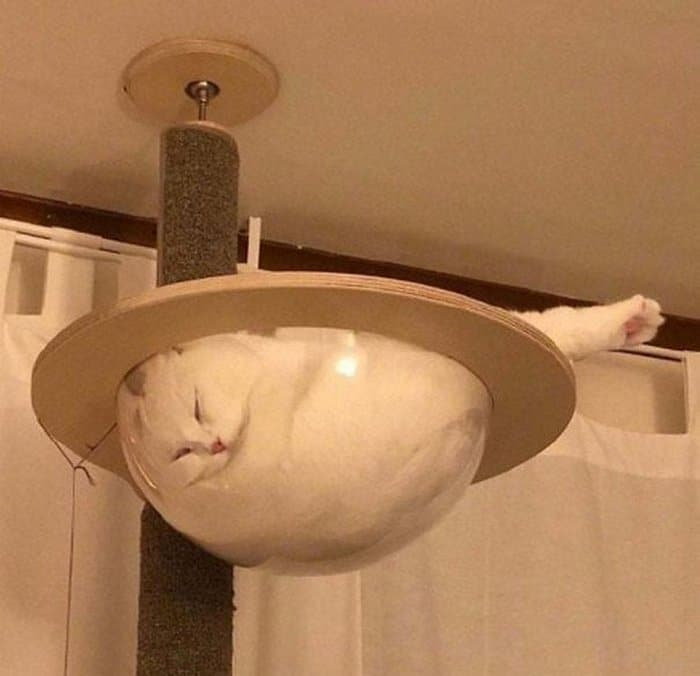 40 gatos que dormiram nos lugares mais estranhos 5