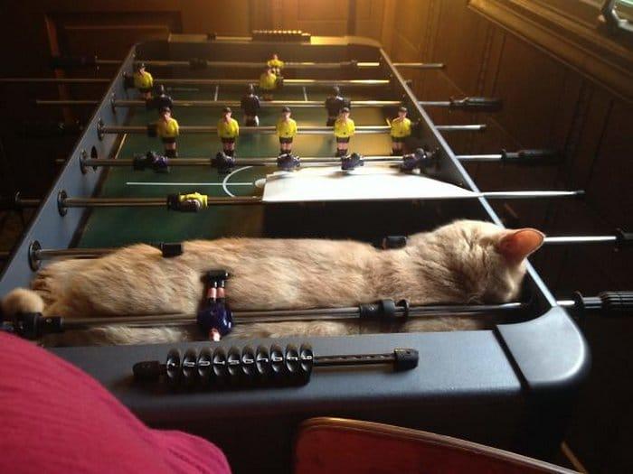 40 gatos que dormiram nos lugares mais estranhos 7