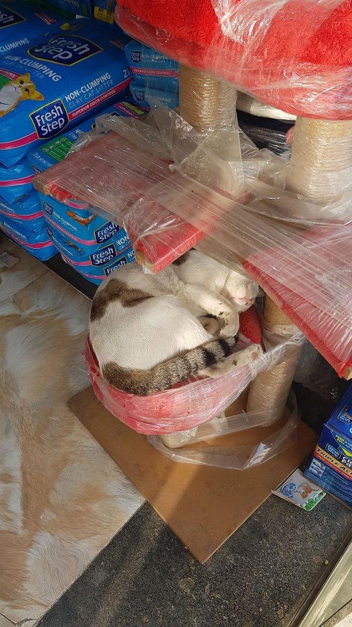 40 gatos que dormiram nos lugares mais estranhos 10