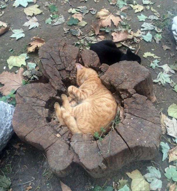 40 gatos que dormiram nos lugares mais estranhos 12