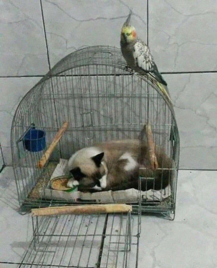40 gatos que dormiram nos lugares mais estranhos 13