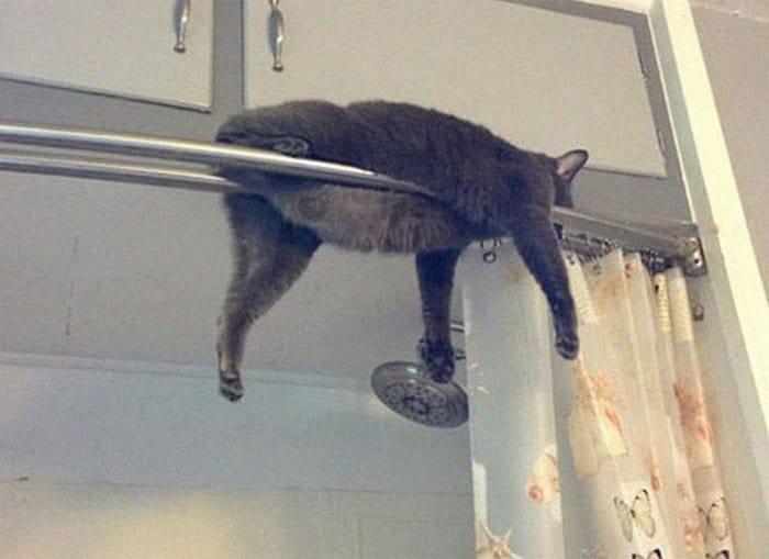 40 gatos que dormiram nos lugares mais estranhos 15