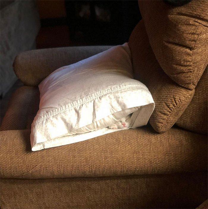 40 gatos que dormiram nos lugares mais estranhos 17