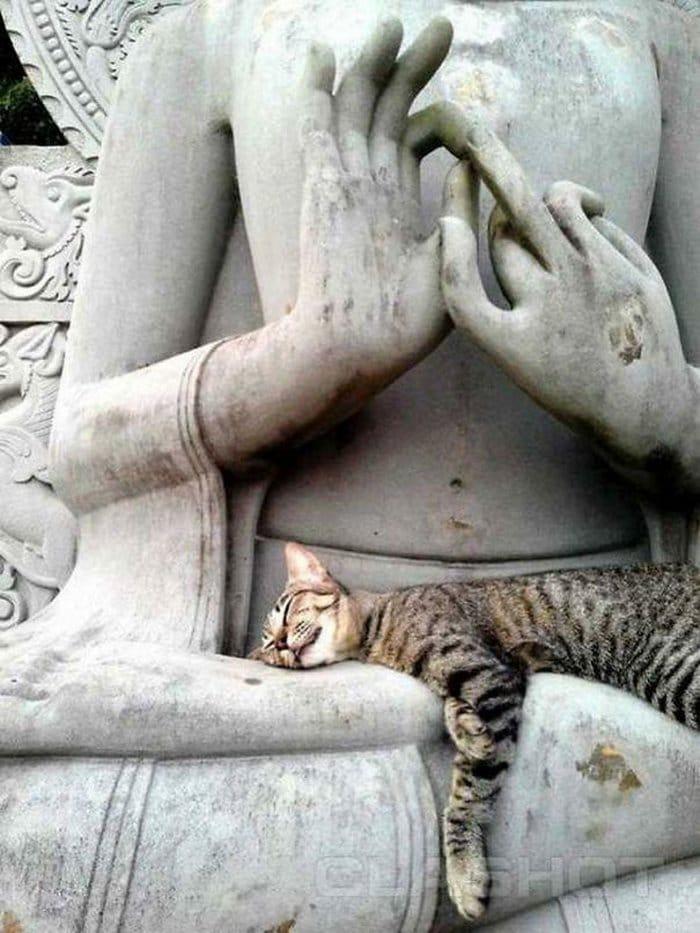 40 gatos que dormiram nos lugares mais estranhos 19