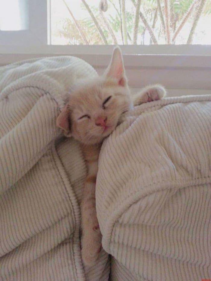 40 gatos que dormiram nos lugares mais estranhos 22