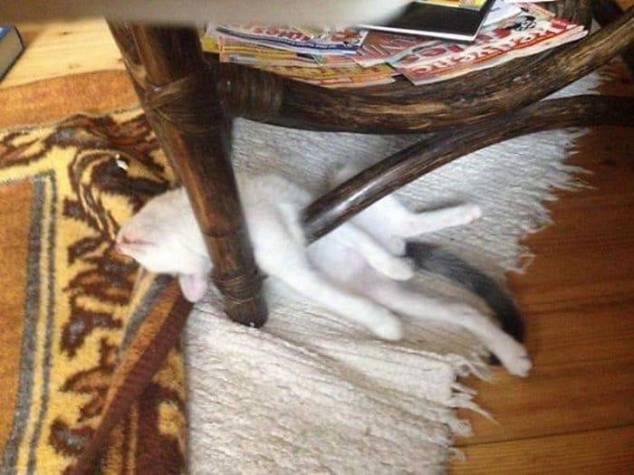 40 gatos que dormiram nos lugares mais estranhos 23