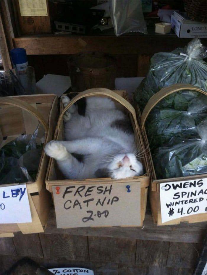 40 gatos que dormiram nos lugares mais estranhos 25