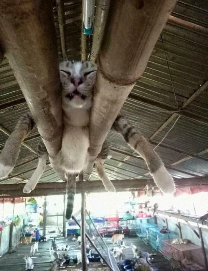 40 gatos que dormiram nos lugares mais estranhos 27