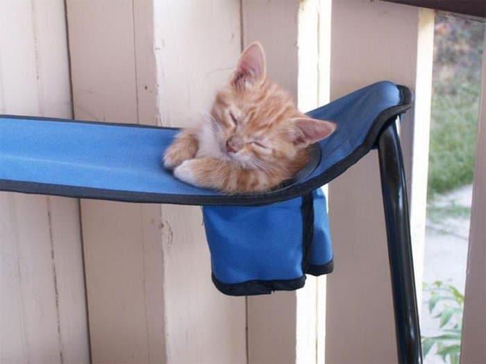 40 gatos que dormiram nos lugares mais estranhos 29