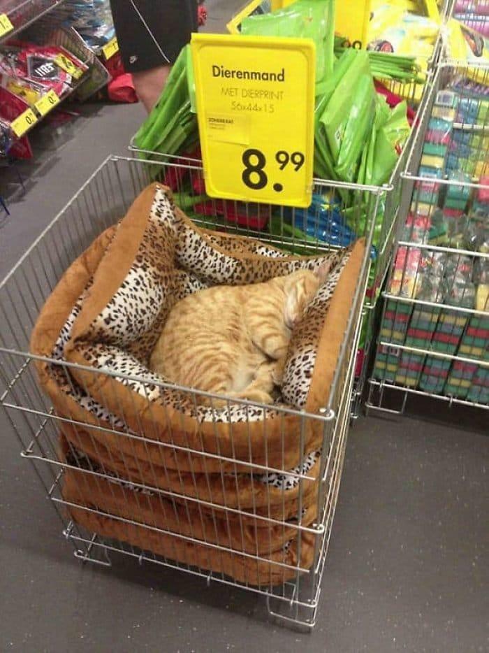 40 gatos que dormiram nos lugares mais estranhos 32