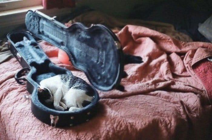 40 gatos que dormiram nos lugares mais estranhos 37
