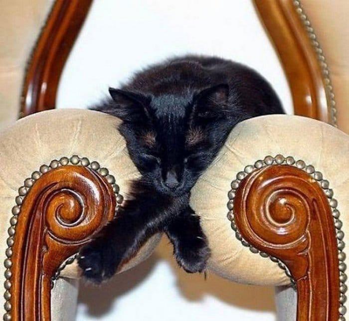 40 gatos que dormiram nos lugares mais estranhos 41