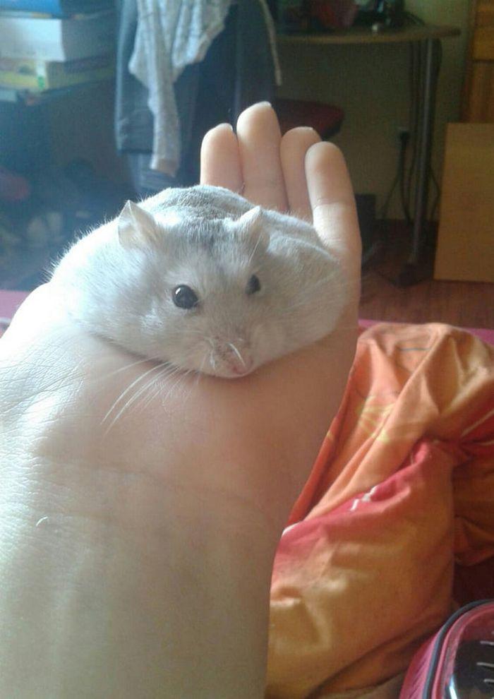 20 panquecas de hamster 3