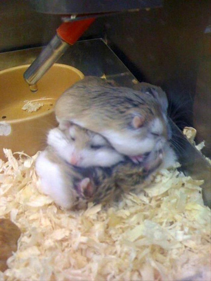 20 panquecas de hamster 4