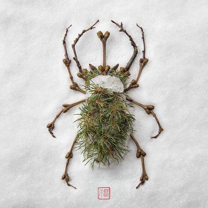 37 retratos delicados de animais criados a partir de coisas encontradas na natureza por Raku Inoue 6