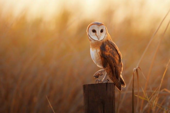 Descubra o seu animal espiritual que guia a sua vida 5